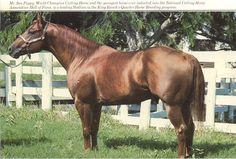 Mr San Peppy-phenomenal quarter horse