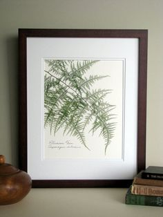 Pressed fern print 11x14 double matted by FlatFlowerDesigns