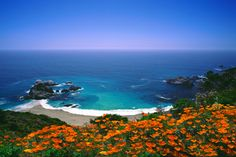 Photography of California - Big Sur Poppies by Locke Heemstra