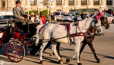 """Misiunea """"Instantanee urbane"""" – Concursuri F64 Beautiful Pictures, Horses, Urban, Animals, Animales, Animaux, Horse, Animal Memes, Animal"""