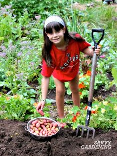 Potatoes are one of the easiest crops to grow, but it can be hard to tell when to harvest. Learn when to harvest potatoes, and how to cure and store them. Potato Gardening, Organic Gardening, Gardening Tips, Vegetable Gardening, Vegetable Garden Design, Garden Tools, When To Harvest Potatoes, Mason Jar Garden, Mason Jars