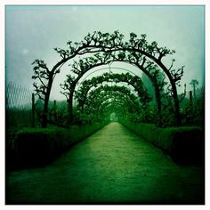 Espalier fruit trees trained over arches.