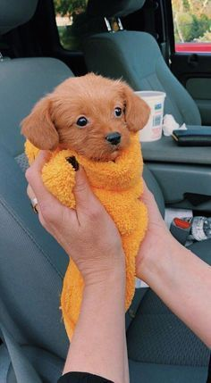 🐶🐱Looking for cute jewelry for best friends/teens/tiny pet & animal~💝Ex. - 🐶🐱Looking for cute jewelry for best friends/teens/tiny pet & animal~💝Ex… – – - Cute Dogs And Puppies, Little Puppies, Baby Dogs, Doggies, Cutest Dogs, Cute Small Dogs, Cutest Puppy Ever, Puppies Tips, Tiny Puppies