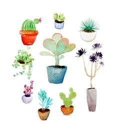 Succulent plants - Wan Wan
