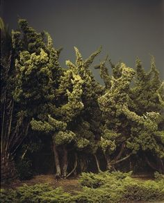 Cypress Trees by Amanda Friedman