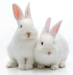 Ask New Zealand to Be Cruelty-Free! http://e-activist.com/ea-action/action?ea.client.id=104&ea.campaign.id=22663&ea.tracking.id=email&ea.url.id=169481&ea.campaigner.email=yc5nOCvAo/ORKt8UNkyb9JkXnmY1yXz/&ea_broadcast_target_id=0
