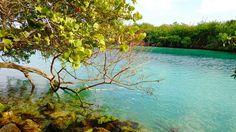 Daydreaming   #Cancún #Cancún #México #México #Mex #QuintanaRoo #Mexicotravel #Caribbean #Caribe #Rivieramaya  #nature #pureness #beautiful #beautifulplace  #photographylovers #sony #photooftheday #photography #pictureoftheday  #photographer #pictures #xperiaphotoacademy #vsco #vscocam #hdr #xperiaphotography #sonyxperiam5 #XperiaM5 #Xperia #InstateXperia