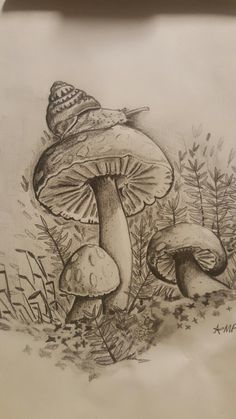 Snail on mushroom. Pencil drawing by Megan Foye. Mushroom Drawing, Mushroom Art, Fantasy Drawings, Pencil Art Drawings, Animal Sketches, Art Sketches, Wald Tattoo, Snail Art, Butterfly Drawing