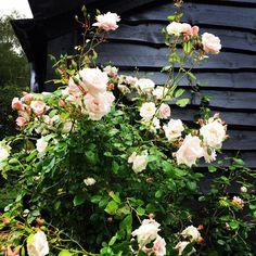 Floral Wreath, Wreaths, Interior, Home Decor, Floral Crown, Decoration Home, Door Wreaths, Indoor, Room Decor