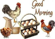 Rooster good morning
