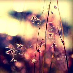 Rainbow garden. by incredi.deviantart.com on @deviantART