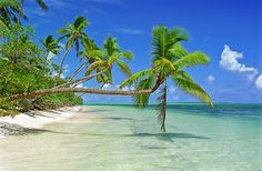 Palm trees over azure waters in Tonga A picture perfect scene, a paradise beach in the South Pacific with palm trees swaying over the azure waters. Summer Paradise, Tropical Paradise, I Love The Beach, Need A Vacation, My Escape, South Pacific, Beautiful Beaches, Palm Trees, Fine Art America