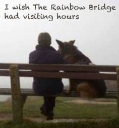 Visiting the rainbow bridge
