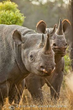 Rhinos by Etienne Oosthuzen Photography