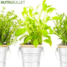 Summer is here, and while some herb gardens are in full bloom, it's never too late to start growing your very own! Plan a trip to the local farm stand for fresh herbs and test out some options y. Nutribullet Recipes, Farm Stand, Living A Healthy Life, Summer Is Here, Fresh Herbs, Herb Garden, Health And Wellness, Planter Pots, Bloom