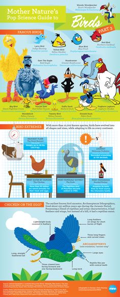 Mother Nature's Pop Science Guide to Birds, Part 3. #animals -  infographic
