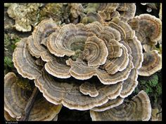 Natural fractal - permaculture design? Sun loving leafy greens higher than the shade and damp loving shroomies??