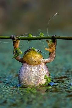 frog. I guess if he can do chin-ups so can I