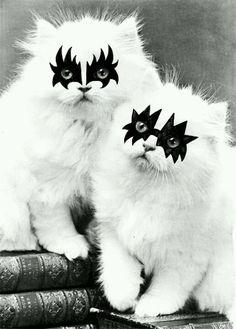 Kiss Kitties