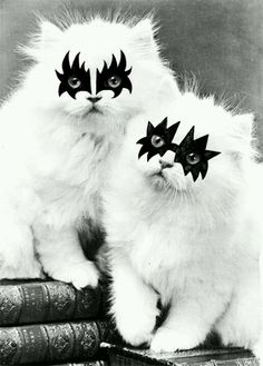 Kiss Kitties