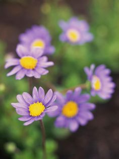 Plant Guide: Short Plants for Sun | Landscaping Ideas and Hardscape Design | HGTV