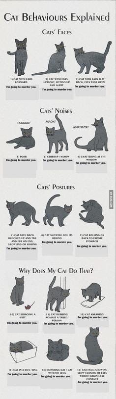 Real cat behaviors explained.
