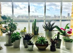 Spring is here and it is time to get rid of winter blues with beautiful plants at home.  #plantstyle. #homecurator