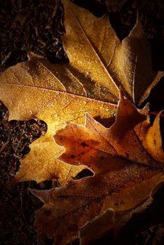 ~Autumn~ Honey & Amber