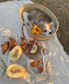 Spring Aesthetic, Nature Aesthetic, Aesthetic Food, Aesthetic Outfit, Picnic Date, Belle Photo, Aesthetic Pictures, Aesthetic Wallpapers, Cute Dogs
