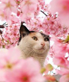 Blossom Cat