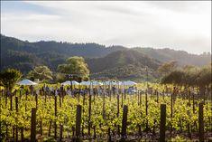 Vineyard Views | Outdoor Wedding | Napa Valley Wedding | Wedding Photography at Brix Restaurant and Gardens | Vineyard Wedding | Christophe Genty Photography
