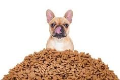 Fruits - What to Look For in Dog Food: 12 Great Suggestions for You - EnkiVillage