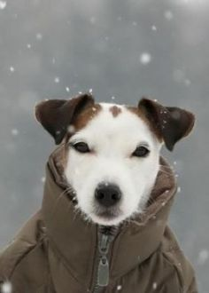 Jack's all ready for a snowy walk! Too cute!