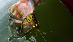 Fly Fishing Bass: 5 Tips for Fishing Frog Patterns