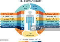 Vector Art : Human Body Infographics