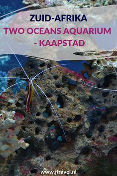 Two Oceans Aquarium in Kaapstad bezit een grote verzameling vissen, schaaldieren, kwallen, schildpadden, pinguïns, kikkers, anemonen, koralen en haaien uit de twee oceanen; de koude Atlantische en de warmere Indische. Hier lees je meer over de Two Oceans Aquarium in Kaapstad. Lees je mee? #twooceansaqurium #kaapstad #zuidafrika #jtravel #jtravelblog