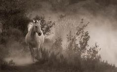 The Virginia Equine Artists Association was founded to promote, market and provide educational opportunities for Virginia Equine artists and photographers. My Horse, Horse Love, Horses, Equine Art, Girls Best Friend, That Way, Mythology, Fur Babies, Mystic