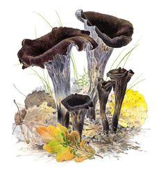 Mustatorvisieni Fungi, Stuffed Mushrooms, Zero Waste, Plants, Painting, Art, Mushroom, Stuff Mushrooms, Art Background