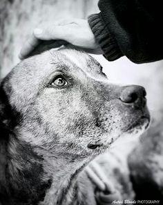 Por una caricia que te tranquilice - antua blonde photography -  fotógrafo solidario - barcelona - animal - fotos - reportajes - animal de compañía - maresme
