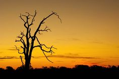 tree at sunset images | Kruger National Park