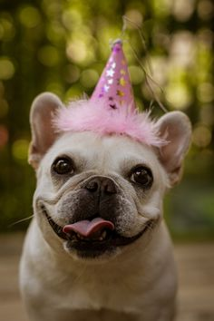 Thinking about throwing a dog birthday party and looking for party ideas? We're covering everything you need to know to throw a dog birthday party. Dressage, Dog Bucket List, World Smile Day, Dog Birthday, Happy Birthday, Free Birthday, Birthday Wishes, Birthday Cake, Animal Hats