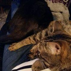 KOTI, Minä&LEMMIKIT. Ihanat&Rakkaat Kissat, osaavat myös rauhoittua ja rentoutua. Näin Meillä rentoudutaan iltasella, katsotaan Telkkaria ja....YHDESSÄ Kasassa, lähekkäin sohvalla. Tykkään&Nautin. HYMY #koti #lemmikit #kissat #yhdessä #vapaaaika #ilta #rentoutua #sohva #blogi #elämäntyyli ❤☺