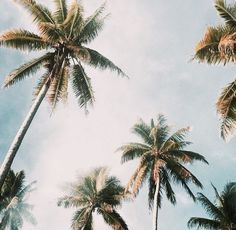Palms, sun, and all the time in the world.