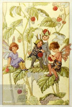'Raspberries' - Illustration from the book 'The Wild Fruit Fairies'. Margaret Tarrant