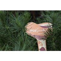 Pino Insigne (Pinus Radiata)Micorrizado, Productor de Níscalos O Rovellones (Lactarius Deliciosus (10-30 Cm). 1 Unidad