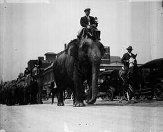 Elephants/Circus Parade