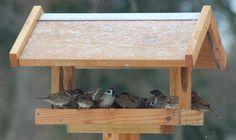 Feldsperlinge am vogelhaus, Die Vogelfutterhäuschen gibt es in vielen verschiedenen Größen und Ausführungen. Mit ihrem rustikalen Aussehen und dem diskreten Design passen sie sowohl in Gärten als auch in Parkanlagen. Nur beste Materialien sind benutzt. Die Futterhäuschen sind aus dänischem, wetterbeständigem Lärchenholz hergestellt und mit rostfreien Stahlschrauben montiert. Ein durch und durch umweltverträgliches Produkt. Genau die richtige Wahl, wenn Sie auf der Suche sind, nach langer…