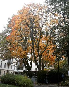 Helsinki, Finland, Student, Autumn, Photography, Instagram, Photograph, Fall Season, Fotografie
