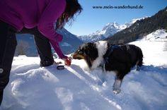 Selbst gemacht: Pfotensalbe für Hunde