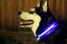 Halo Mini LED Safety Pet Collar Blue
